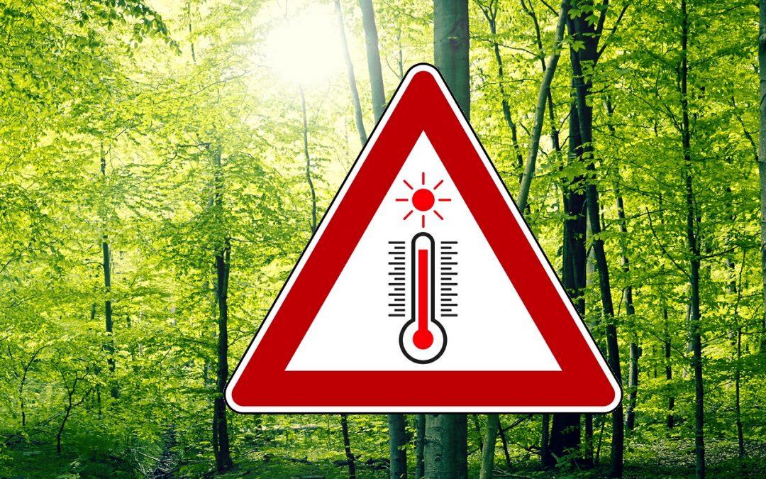 Steigende Temperaturen und weniger Niederschlag führen zu Wassermangel in Bayern